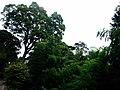 西光院の庭 - panoramio.jpg
