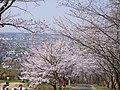 近つ飛鳥風土記の丘 緑の広場 2013.3.30 - panoramio.jpg