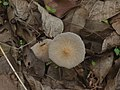 ... mushroom (4695454243).jpg