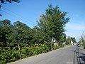 02936jfSabang Rice Fields Creeks San Rafael Roads Bulacanfvf 45.JPG