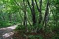 180727 Nasu Heisei-no-mori Forest Nasu Japan07.JPG