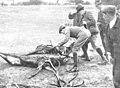 1910-01-27, Actualidades, Cacería regia en El Pardo, Goñi (cropped) El rey examinando una de las reses muertas.jpg
