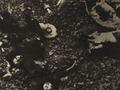 1950 中美合作社2.png