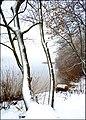 1 Зимовий берег.jpg