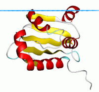 human steroidogenic acute regulatory protein