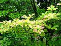 2012 kveten botanicka zahrada 038.JPG