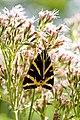 2014-08-10 11-10-27 insecte.jpg