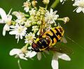 2014-08-10 11-21-03 insecte.jpg
