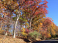 2014-11-02 13 34 24 Trees during autumn along Pleasant Valley Road in Hopewell Township, New Jersey.JPG