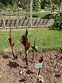 2015-05-27 Paris, Jardin des plantes 20.jpg