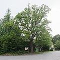 20150627 Eiche Tirolerhofsiedlung Perchtoldsdorf 8254.jpg