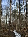 2016-02-08 12 43 43 View north along the Gerry Connolly Cross County Trail between Miller Heights Road and Vale Road in Oakton, Fairfax County, Virginia.jpg