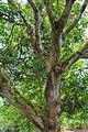 2016 Singapur, Ogrody botaniczne (036).jpg