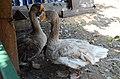 2019-08-10. Зоопарк в Придорожном 082.jpg
