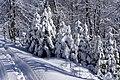 20200208 Ośnieżone drzewa na Lubaniu 1232 0691.jpg