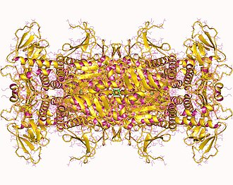 Phosphoribosylaminoimidazole carboxylase - Phosphoribosylaminoimidazole carboxylase oktamer, Human