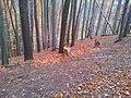 565 01 Choceň, Czech Republic - panoramio (11).jpg