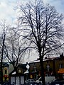 A@a winter picture in Siewierz Poland - panoramio.jpg