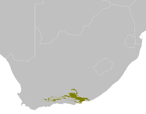 Albany thickets - The Albany thickets ecoregion in southern South Africa