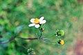 A Flower Like Hope.jpg