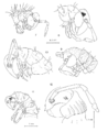 A Synopsis of the Cave Millipeds of the United States 7-12.png