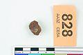 A fragment of silver pressblech foil from a helmet (FindID 555749).jpg