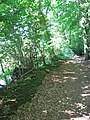 A shady path along the River Yare - geograph.org.uk - 1368209.jpg