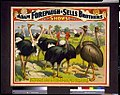 Adam Forepaugh & Sells Brothers great shows consolidated A congress of the giant birds of the world, ... LCCN94507621.jpg