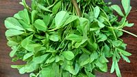 Aesthetic bunch of fenugreek greens.jpg