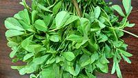 Aesthetic bunch of fenugreek greens