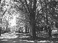 Alberi nel parco dei Grumi dei Frati.JPG