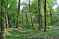 Alejka spacerowa w Charzewickim parku.JPG