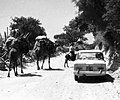 Alfa romeo biondi bodrum 1968.jpg