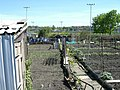 Allotment Gardens, Burslem - geograph.org.uk - 164743.jpg