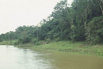 Pará - Amazon River in Amazon Rainforest.