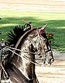 American Saddlebred 3.jpg