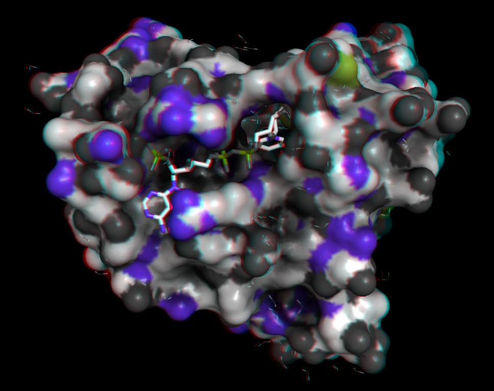 Anaglyph image of a protein DHFR