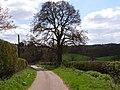 Andrew Hill Lane, Hedgerley - geograph.org.uk - 162823.jpg