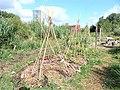Ann's Farm (10).jpg