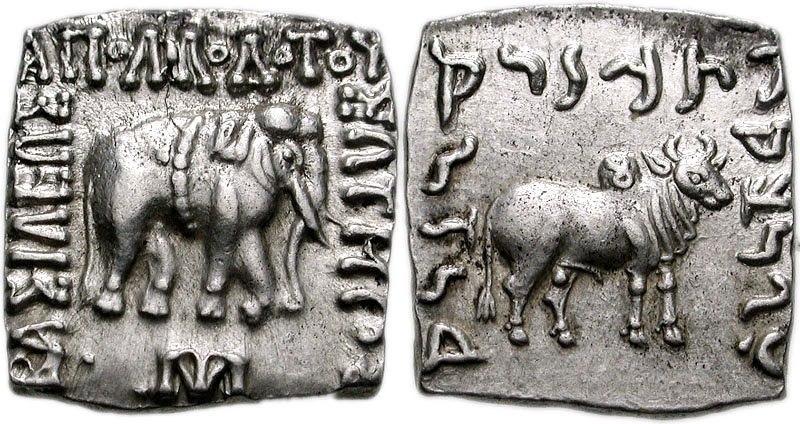 Apollodotus bull with nandipada