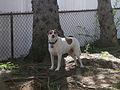 Appalachian Terrier.jpg