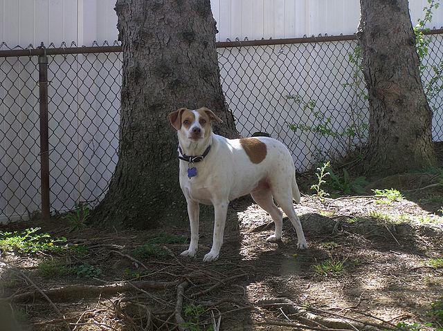 Heinz 57 dog breed mav lining paper