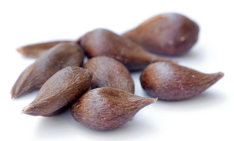 File:Apple seeds - variety Prinzenapfel (aka).jpg