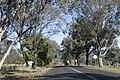 Apsley NSW 2820, Australia - panoramio (5).jpg