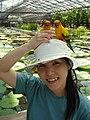 Aratinga solstitialis -Kakegawa Kacho-en, Kakegawa, Shizuoka, Japan -perching on hat-8a.jpg