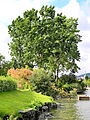 Arboretum - General-Guisan-Quai 2012-07-03 18-00-29 (P7000).JPG