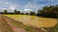 Arrozal, Angkor, Camboya, 2013-08-16, DD 03.JPG
