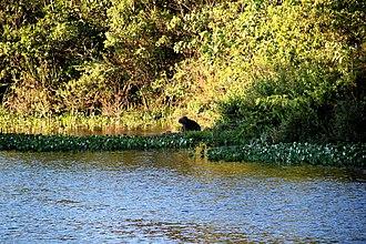 Serra do Cipó National Park - Image: Aserracipo 14seg 17quiout 13 photogarzon 644