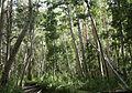 Aspen woods Lundy Canyon.jpg