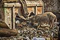 At the Trash Pile (10522616033).jpg